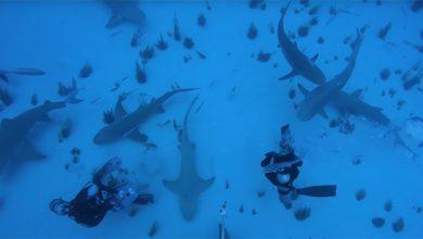 Photo of Meglepően lusta vadász az óceán egyik legrettegettebb ragadozója