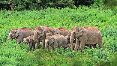 Photo of Méhzümmögéssel tartják távol az elefántokat a vasúti sínektől Indiában