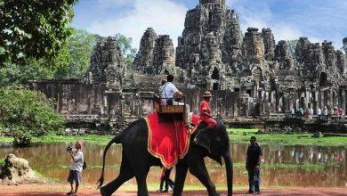 Photo of Betiltják az elefánton való túrázást Angkorban