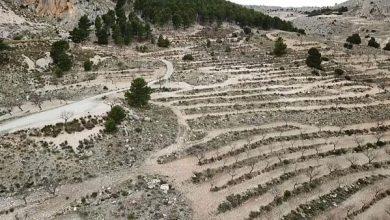 Photo of Az elsivatagosodás ellen épít falat Spanyolország