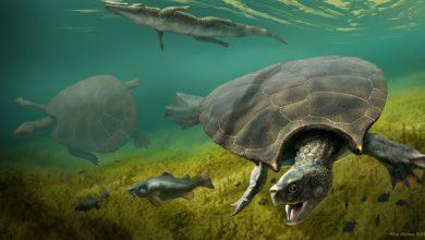 Photo of A valaha létezett legnagyobb teknősfaj fosszíliáját fedezték fel Dél-Amerikában