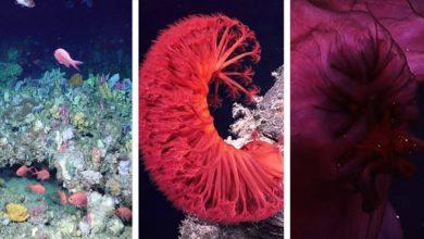 Photo of Lenyűgöző mélytengeri korallkerteket és ismeretlen ökoszisztémákat fedeztek fel Ausztráliában