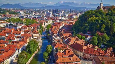 Photo of Ljubljana virágzó rétekké változtatja a parkokat a méhek számára
