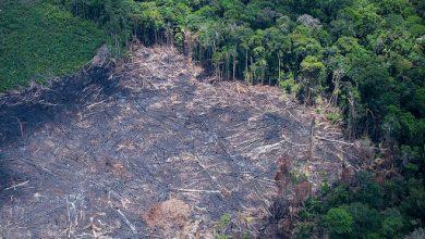 Photo of Hat másodpercenként tűnt el egy focipályányi érintetlen őserdő tavaly a Földön