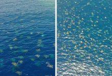 Photo of Több mint 60 ezer teknőst figyeltek meg a Nagy-korallzátony egyik szigeténél