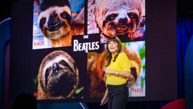 Photo of Íme, a lajhár! – A világ leglassabb állatának különös élete