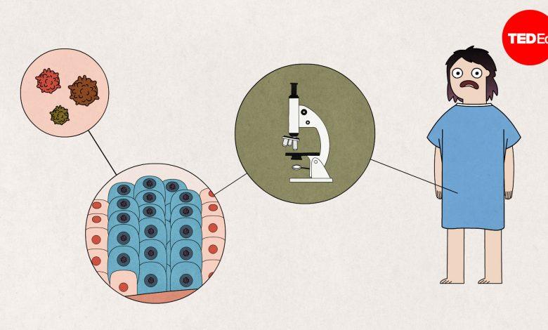 Hpv vírus hogyan lehet elkapni