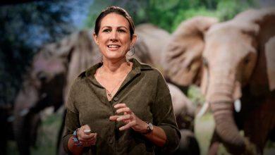 Photo of Hogyan segítenek a méhek fenntartani a békét elefántok és emberek között