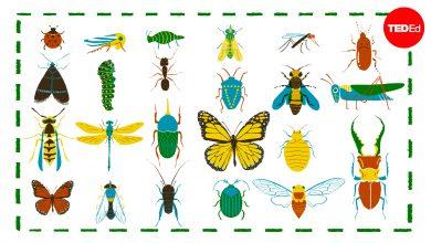Photo of Hogyan osztályozzuk a rovarokat egyszerűen?