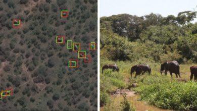Photo of A világűrből számoltak elefántokat