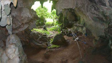 Photo of A világ legrégebbi barlangi állatfestményét találták meg Indonéziában