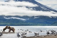 Photo of Új sorozattal jelentkezik David Attenborough – videó