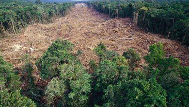 Photo of 4,5 magyarországnyi őserdő pusztult el a világon 2004 és 2018 között