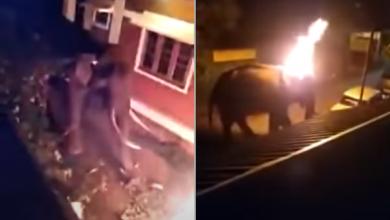 Photo of Égő autógumit dobtak egy lakott területre tévedt elefántra