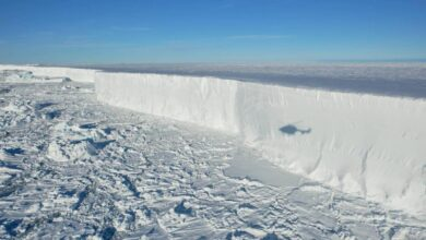 Photo of Hemzseg az állatoktól az Antarktiszról leszakadt A74 jéghegy környezete