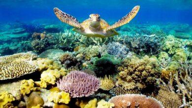 Photo of Ötszáz milliárd korall élhet a Csendes-óceánban