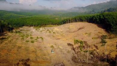 Photo of A világ trópusi esőerdőinek kétharmadát pusztította már el az emberiség