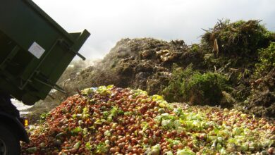 Photo of 931 millió tonna élelmiszer végezte a szemétben egy év alatt