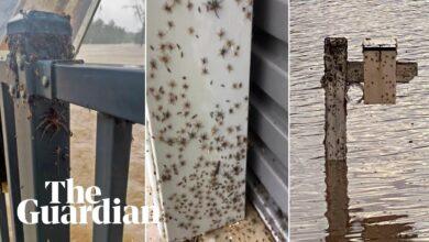 Photo of Pókok milliói árasztották el a házakat az ausztráliai árvíz elől menekülve