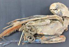 Photo of Mumifikált papagájokat találtak az Atacama-sivatagban