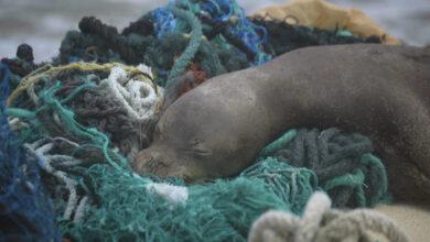 Photo of 50 tonna szemetet halásztak ki a tengerből Hawaii partjainál