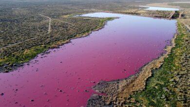 Photo of Rózsaszínné változott egy patagóniai lagúna Argentína déli részén