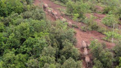Photo of Hazaindult a Kínában vándorló 14 tagú elefántcsorda