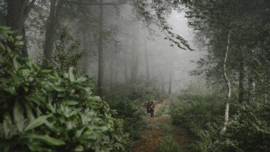 Photo of Grúzia esőerdeiben olyan érzésünk támad, mintha Amazóniában járnánk
